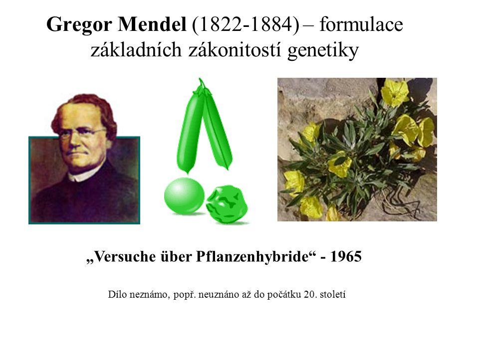 """Gregor Mendel (1822-1884) – formulace základních zákonitostí genetiky Dílo neznámo, popř. neuznáno až do počátku 20. století """"Versuche über Pflanzenhy"""
