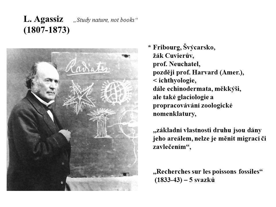 L. Agassiz (1807-1873) * Fribourg, Švýcarsko, žák Cuvierův, prof. Neuchatel, později prof. Harvard (Amer.), < ichthyologie, dále echinodermata, měkkýš
