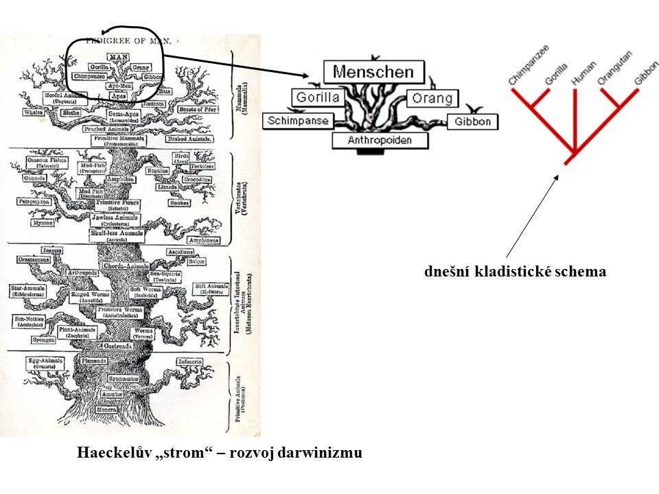 """Haeckelův """"strom"""" – rozvoj darwinizmu dnešní kladistické schema"""
