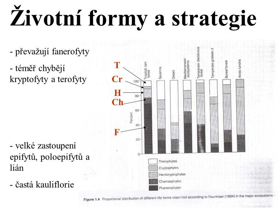 Životní formy a strategie F Ch H Cr T - převažují fanerofyty - téměř chybějí kryptofyty a terofyty - velké zastoupení epifytů, poloepifytů a lián - častá kauliflorie