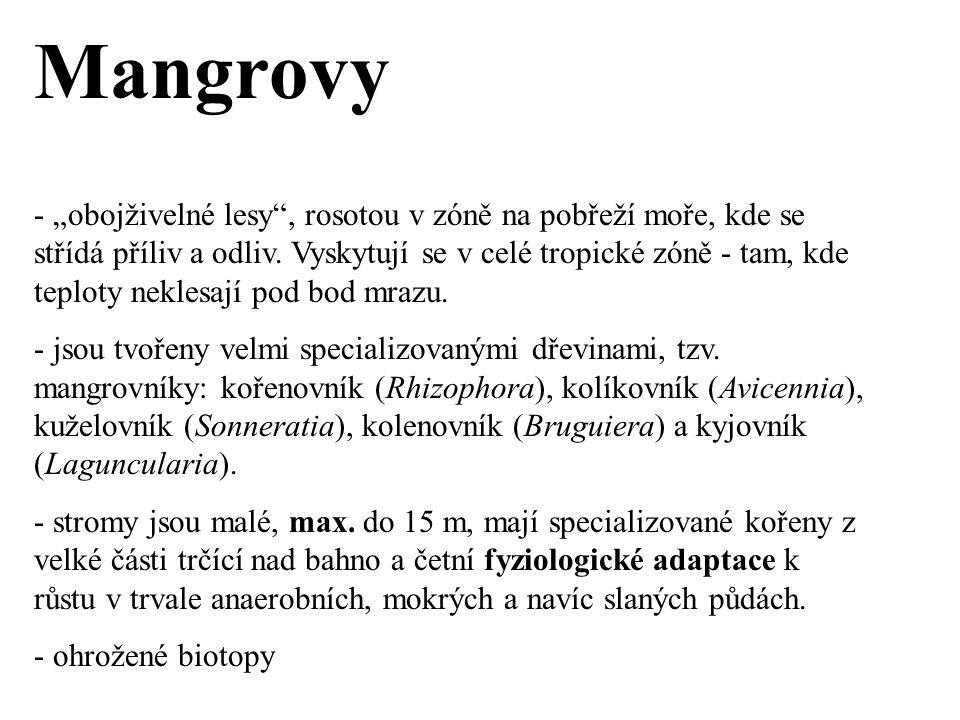 """Mangrovy - """"obojživelné lesy , rosotou v zóně na pobřeží moře, kde se střídá příliv a odliv."""