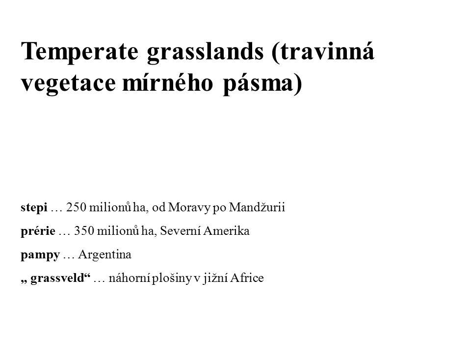 """Temperate grasslands (travinná vegetace mírného pásma) stepi … 250 milionů ha, od Moravy po Mandžurii prérie … 350 milionů ha, Severní Amerika pampy … Argentina """" grassveld … náhorní plošiny v jižní Africe"""