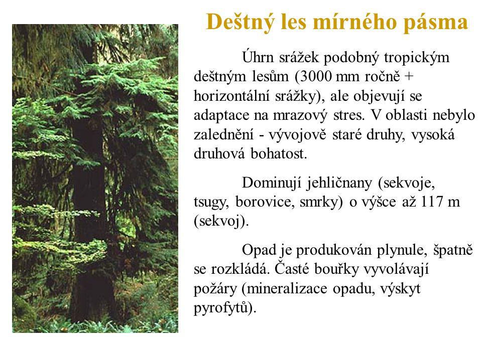 Deštný les mírného pásma Úhrn srážek podobný tropickým deštným lesům (3000 mm ročně + horizontální srážky), ale objevují se adaptace na mrazový stres.