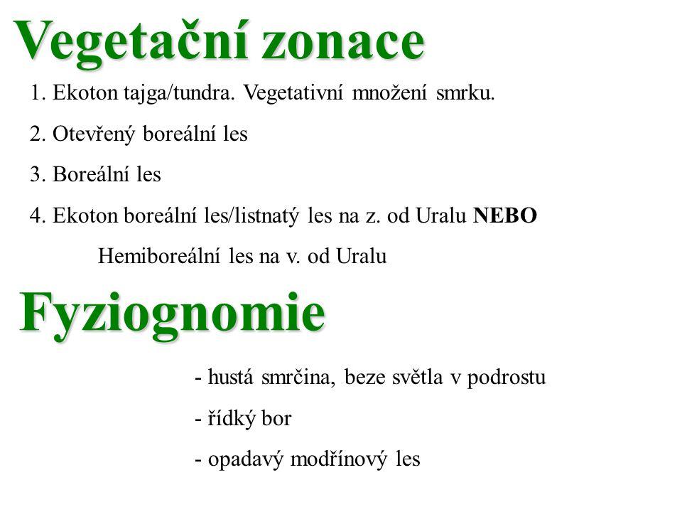Vegetační zonace 1.Ekoton tajga/tundra. Vegetativní množení smrku.