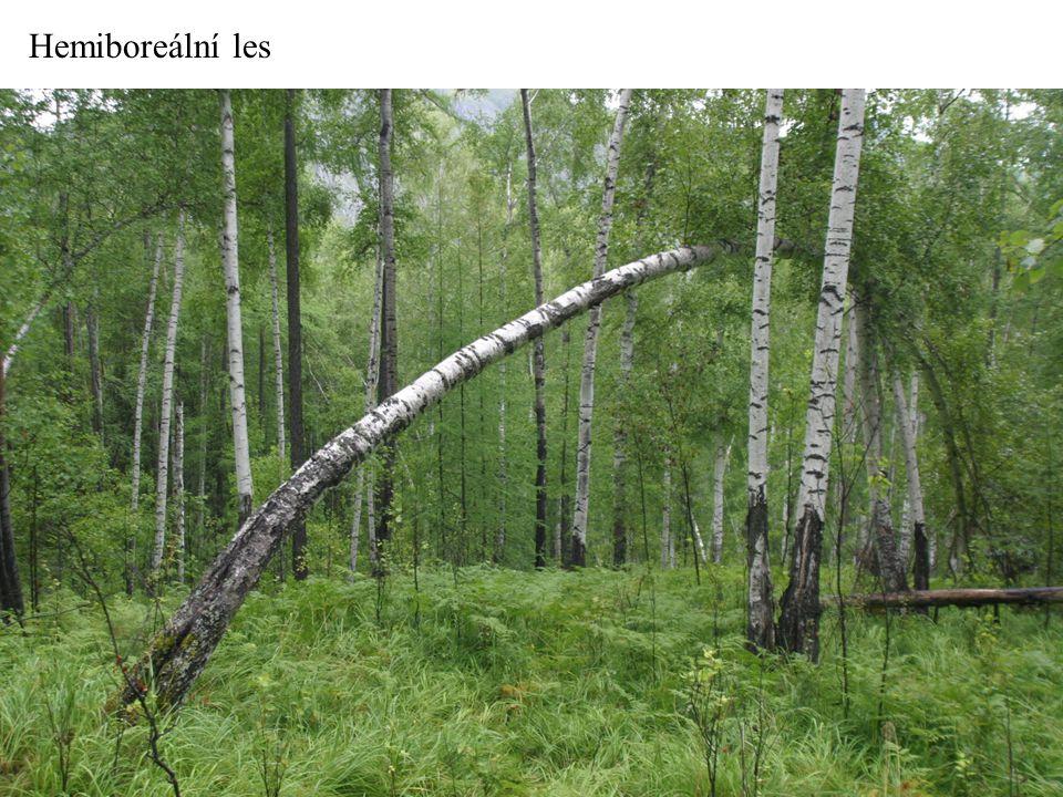 Hemiboreální les