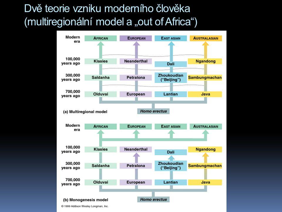 """Dvě teorie vzniku moderního člověka (multiregionální model a """"out of Africa"""")"""