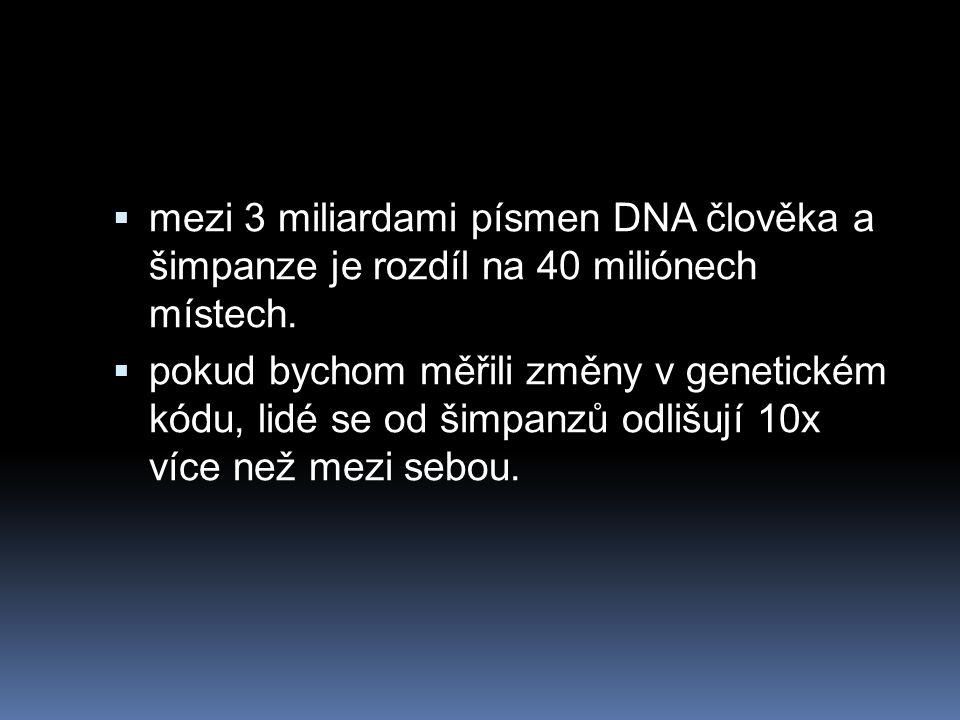  mezi 3 miliardami písmen DNA člověka a šimpanze je rozdíl na 40 miliónech místech.  pokud bychom měřili změny v genetickém kódu, lidé se od šimpanz