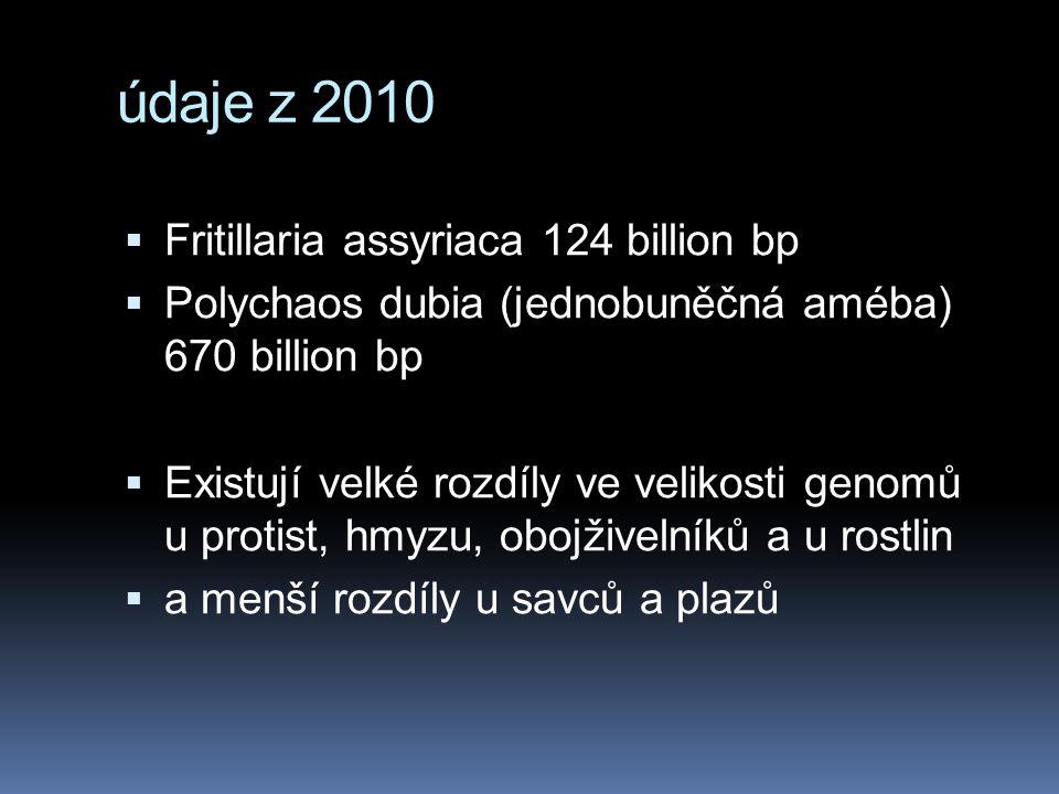 údaje z 2010  Fritillaria assyriaca 124 billion bp  Polychaos dubia (jednobuněčná améba) 670 billion bp  Existují velké rozdíly ve velikosti genomů u protist, hmyzu, obojživelníků a u rostlin  a menší rozdíly u savců a plazů