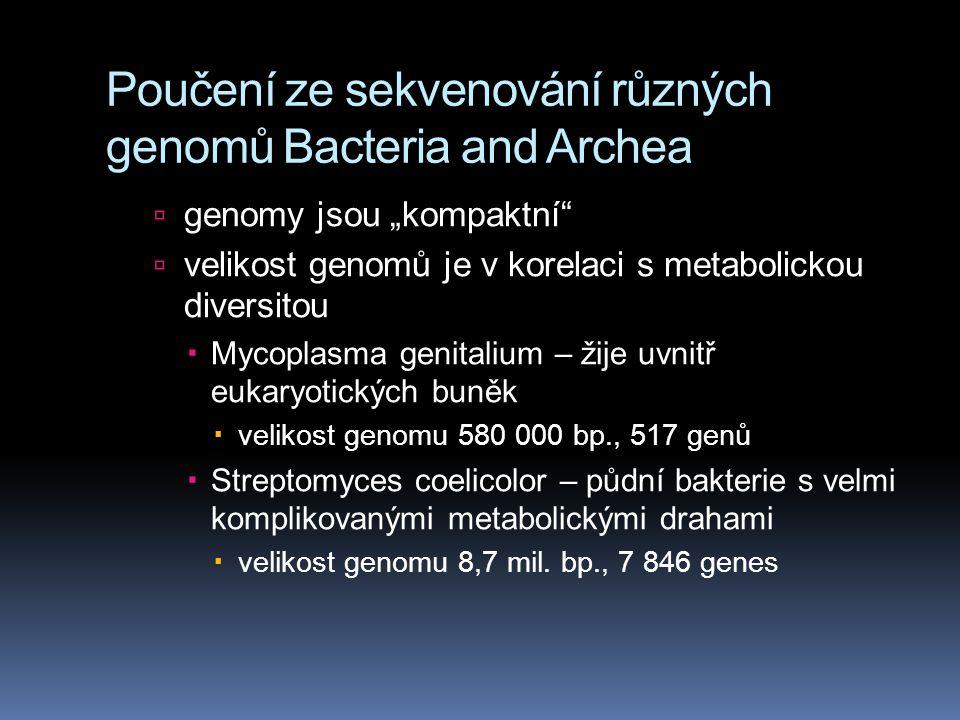 """Poučení ze sekvenování různých genomů Bacteria and Archea  genomy jsou """"kompaktní  velikost genomů je v korelaci s metabolickou diversitou  Mycoplasma genitalium – žije uvnitř eukaryotických buněk  velikost genomu 580 000 bp., 517 genů  Streptomyces coelicolor – půdní bakterie s velmi komplikovanými metabolickými drahami  velikost genomu 8,7 mil."""