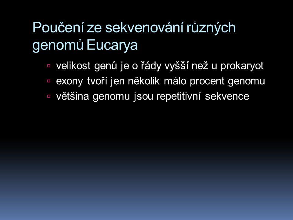 Poučení ze sekvenování různých genomů Eucarya  velikost genů je o řády vyšší než u prokaryot  exony tvoří jen několik málo procent genomu  většina