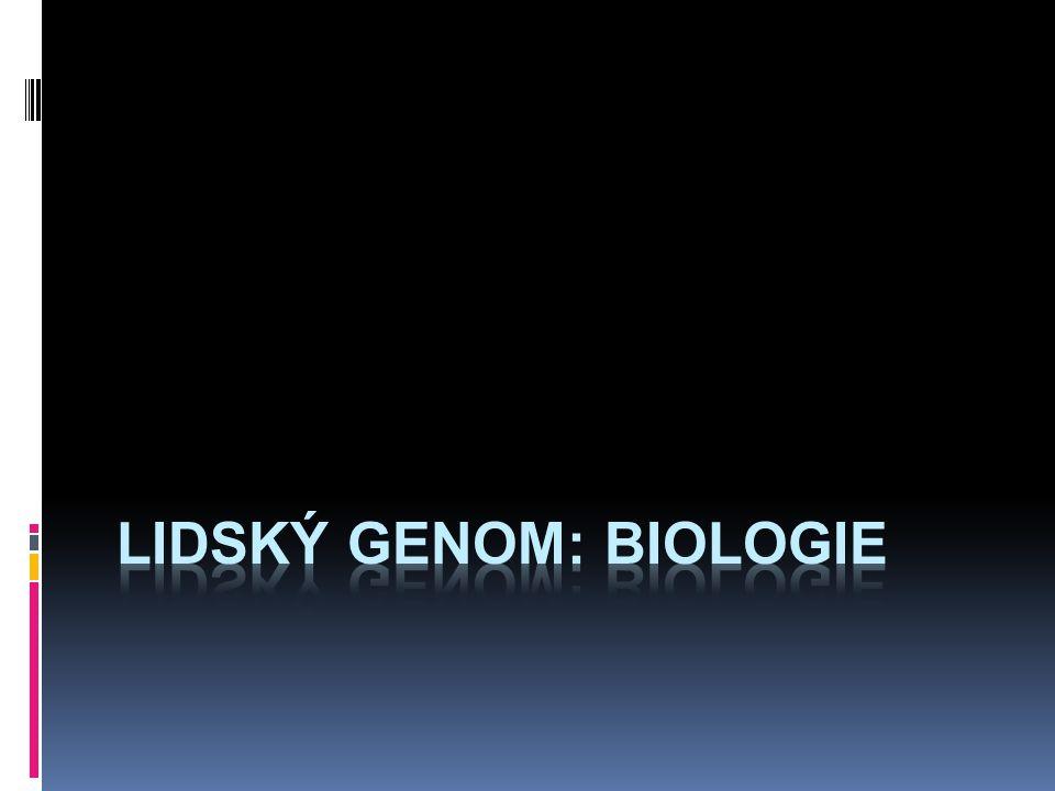 Kreacionismus je mrtvý  51% sekvencí sdílíme s kvasinkami  57% sdílíme s Brassica oleracea  98,6% sdílíme se šimpanzi