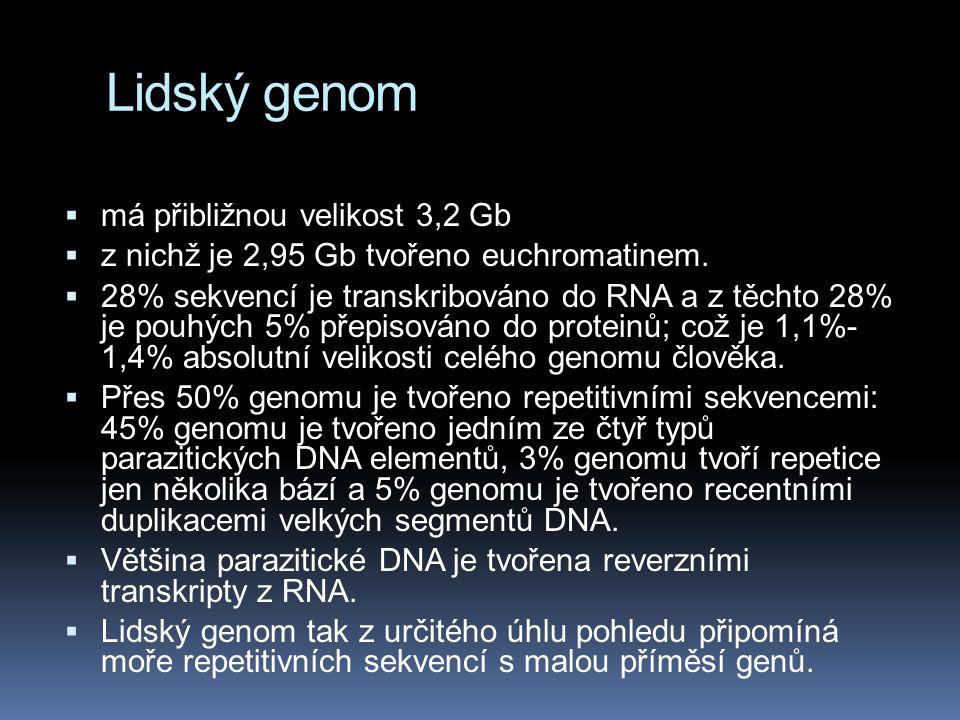 Lidský genom  má přibližnou velikost 3,2 Gb  z nichž je 2,95 Gb tvořeno euchromatinem.