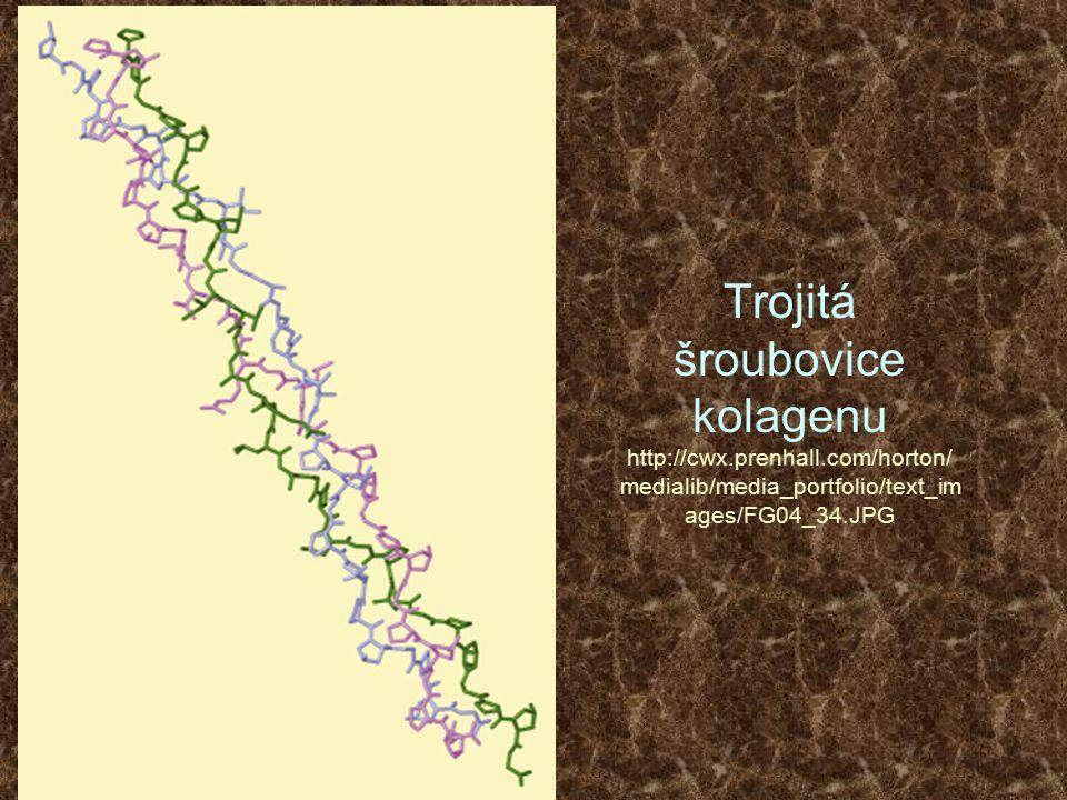 Trojitá šroubovice kolagenu http://cwx.prenhall.com/horton/ medialib/media_portfolio/text_im ages/FG04_34.JPG