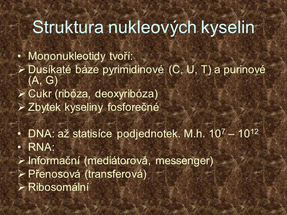 Struktura nukleových kyselin Mononukleotidy tvoří:  Dusíkaté báze pyrimidinové (C, U, T) a purinové (A, G)  Cukr (ribóza, deoxyribóza)  Zbytek kyse