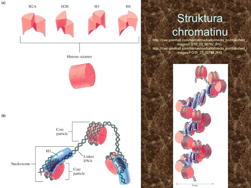 Struktura chromatinu http://cwx.prenhall.com/horton/medialib/media_portfolio/text_i mages/FG19_23_00742.JPG, http://cwx.prenhall.com/horton/medialib/m