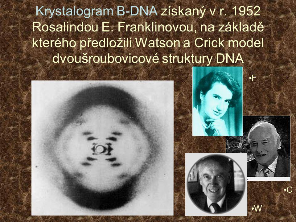 Krystalogram B-DNA získaný v r. 1952 Rosalindou E. Franklinovou, na základě kterého předložili Watson a Crick model dvoušroubovicové struktury DNA F W