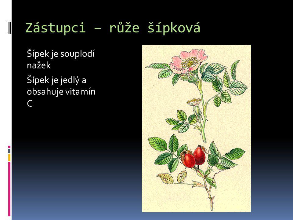 Zástupci – růže šípková Šípek je souplodí nažek Šípek je jedlý a obsahuje vitamín C