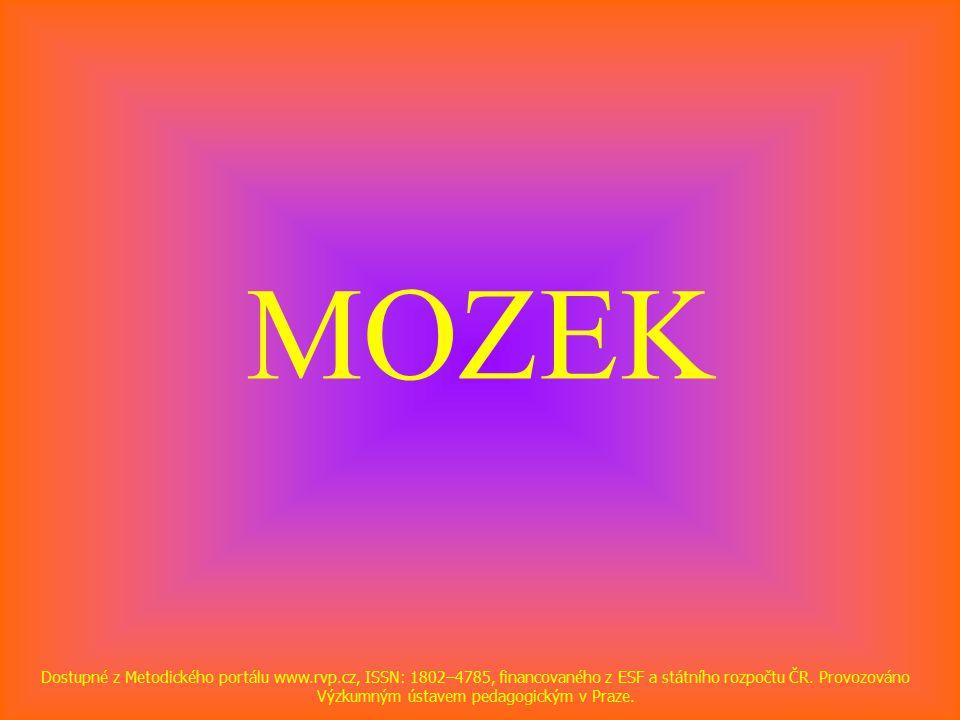 MOZEK Dostupné z Metodického portálu www.rvp.cz, ISSN: 1802–4785, financovaného z ESF a státního rozpočtu ČR.