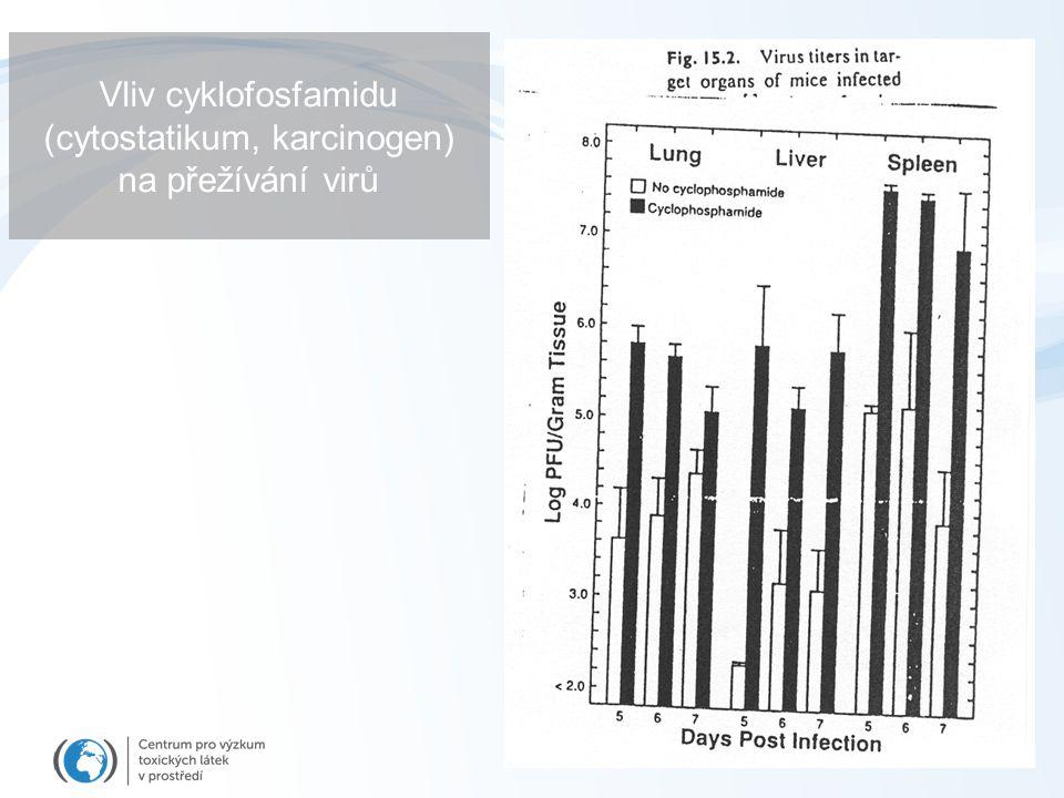 Vliv cyklofosfamidu (cytostatikum, karcinogen) na přežívání virů