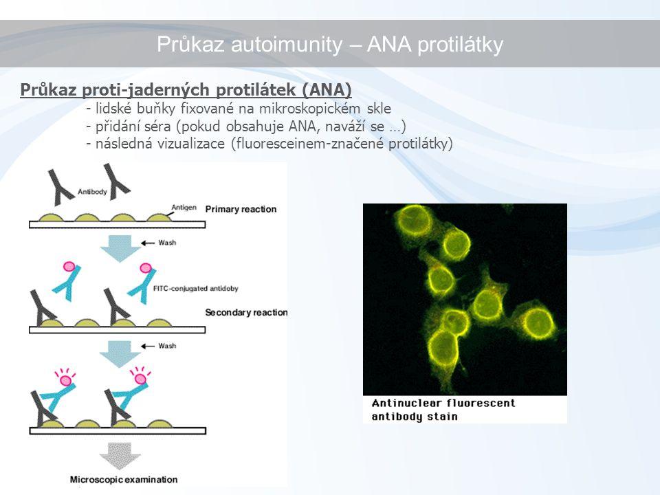 Průkaz proti-jaderných protilátek (ANA) - lidské buňky fixované na mikroskopickém skle - přidání séra (pokud obsahuje ANA, naváží se …) - následná vizualizace (fluoresceinem-značené protilátky) Průkaz autoimunity – ANA protilátky