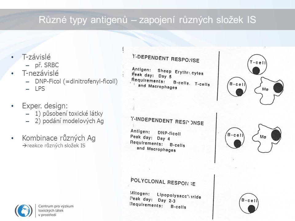 Různé typy antigenů – zapojení různých složek IS T-závislé – př. SRBC T-nezávislé – DNP-Ficol (=dinitrofenyl-ficoll) – LPS Exper. design: – 1) působen