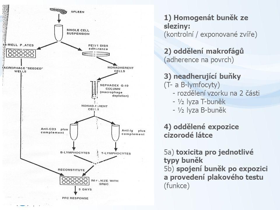 1) Homogenát buněk ze sleziny: (kontrolní / exponované zvíře) 2) oddělení makrofágů (adherence na povrch) 3) neadherující buňky (T- a B-lymfocyty) - rozdělení vzorku na 2 části - ½ lyza T-buněk - ½ lyza B-buněk 4) oddělené expozice cizorodé látce 5a) toxicita pro jednotlivé typy buněk 5b) spojení buněk po expozici a provedení plakového testu (funkce)