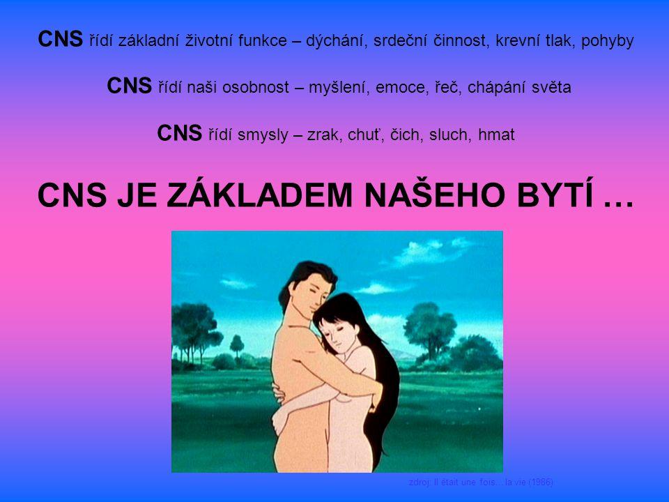 CNS řídí základní životní funkce – dýchání, srdeční činnost, krevní tlak, pohyby CNS řídí naši osobnost – myšlení, emoce, řeč, chápání světa CNS řídí