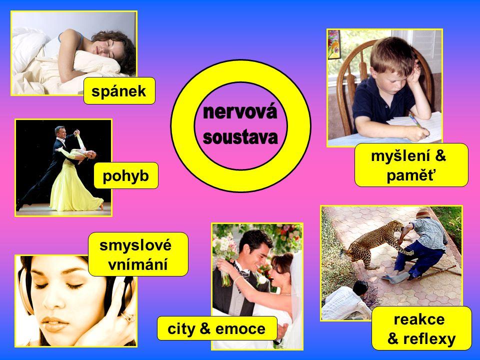 city & emoce pohyb spánek reakce & reflexy smyslové vnímání myšlení & paměť