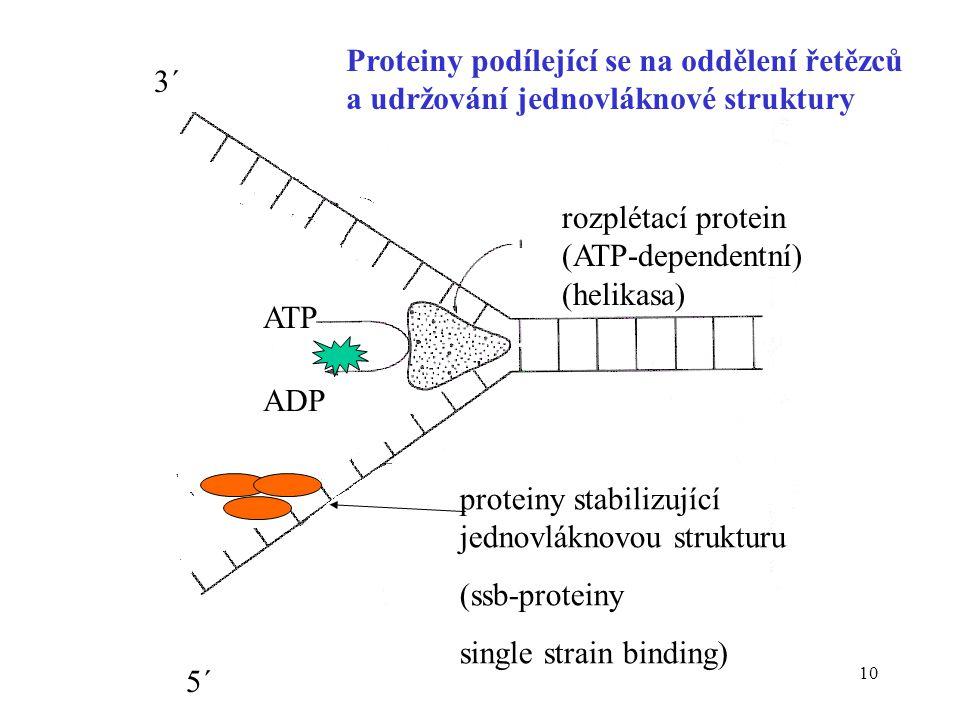 10 rozplétací protein (ATP-dependentní) (helikasa) ATP ADP proteiny stabilizující jednovláknovou strukturu (ssb-proteiny single strain binding) Protei