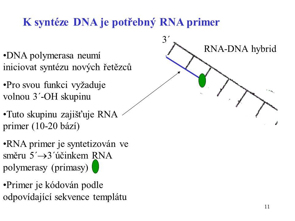 11 K syntéze DNA je potřebný RNA primer DNA polymerasa neumí iniciovat syntézu nových řetězců Pro svou funkci vyžaduje volnou 3´-OH skupinu Tuto skupi