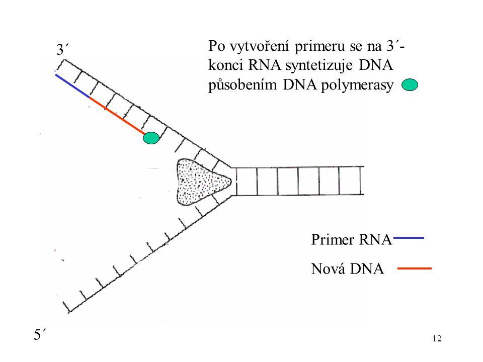 12 Po vytvoření primeru se na 3´- konci RNA syntetizuje DNA působením DNA polymerasy 3´ 5´ Primer RNA Nová DNA