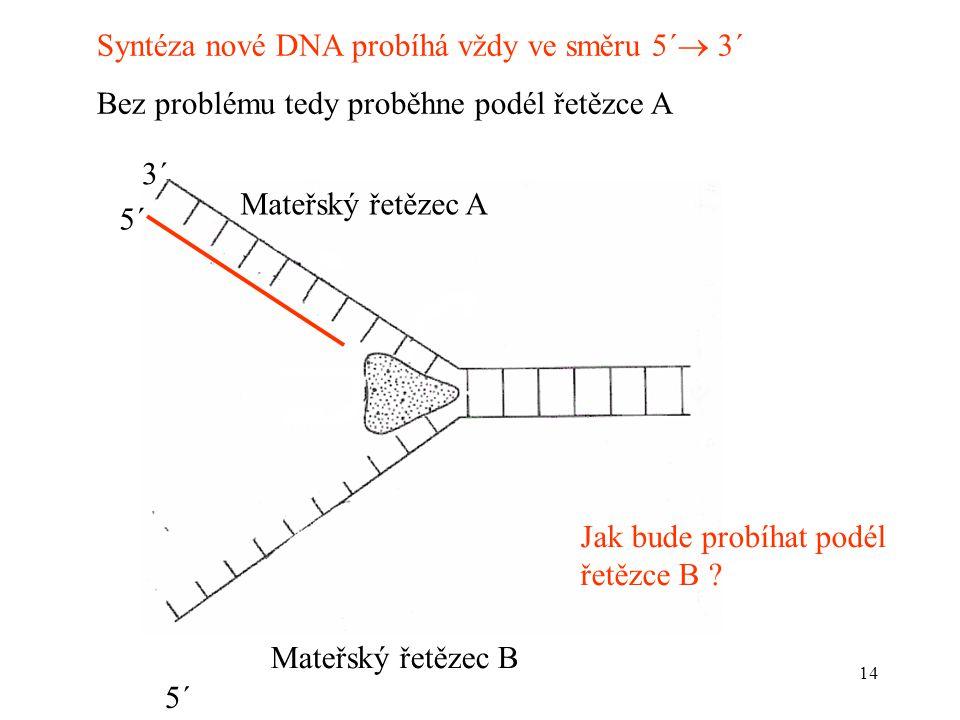 14 Syntéza nové DNA probíhá vždy ve směru 5´  3´ Bez problému tedy proběhne podél řetězce A 3´ Mateřský řetězec A Mateřský řetězec B Jak bude probíha