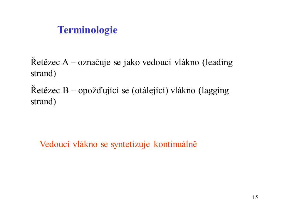 15 Řetězec A – označuje se jako vedoucí vlákno (leading strand) Řetězec B – opožďující se (otálející) vlákno (lagging strand) Terminologie Vedoucí vlá
