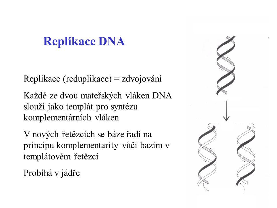 2 Replikace DNA Replikace (reduplikace) = zdvojování Každé ze dvou mateřských vláken DNA slouží jako templát pro syntézu komplementárních vláken V nov