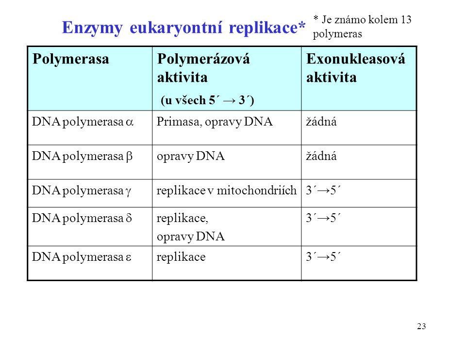 23 Enzymy eukaryontní replikace* PolymerasaPolymerázová aktivita (u všech 5´ → 3´) Exonukleasová aktivita DNA polymerasa  Primasa, opravy DNAžádná DN