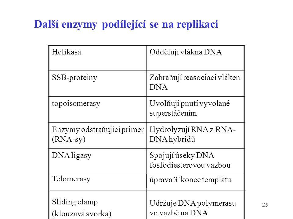 25 Další enzymy podílející se na replikaci HelikasaOddělují vlákna DNA SSB-proteinyZabraňují reasociaci vláken DNA topoisomerasyUvolňují pnutí vyvolan