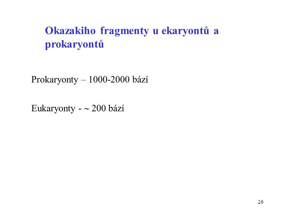 26 Okazakiho fragmenty u ekaryontů a prokaryontů Prokaryonty – 1000-2000 bází Eukaryonty -  200 bází