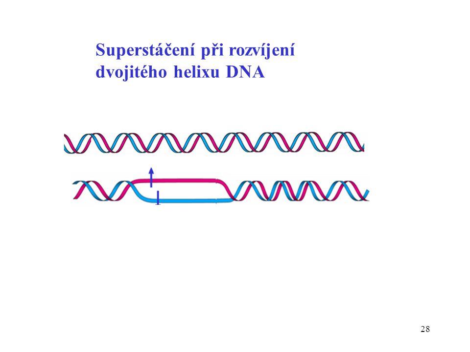 28 Superstáčení při rozvíjení dvojitého helixu DNA
