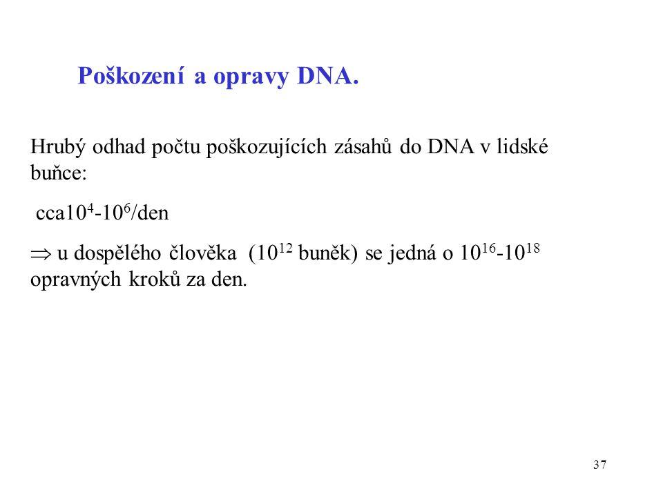 37 Hrubý odhad počtu poškozujících zásahů do DNA v lidské buňce: cca10 4 -10 6 /den  u dospělého člověka (10 12 buněk) se jedná o 10 16 -10 18 opravn