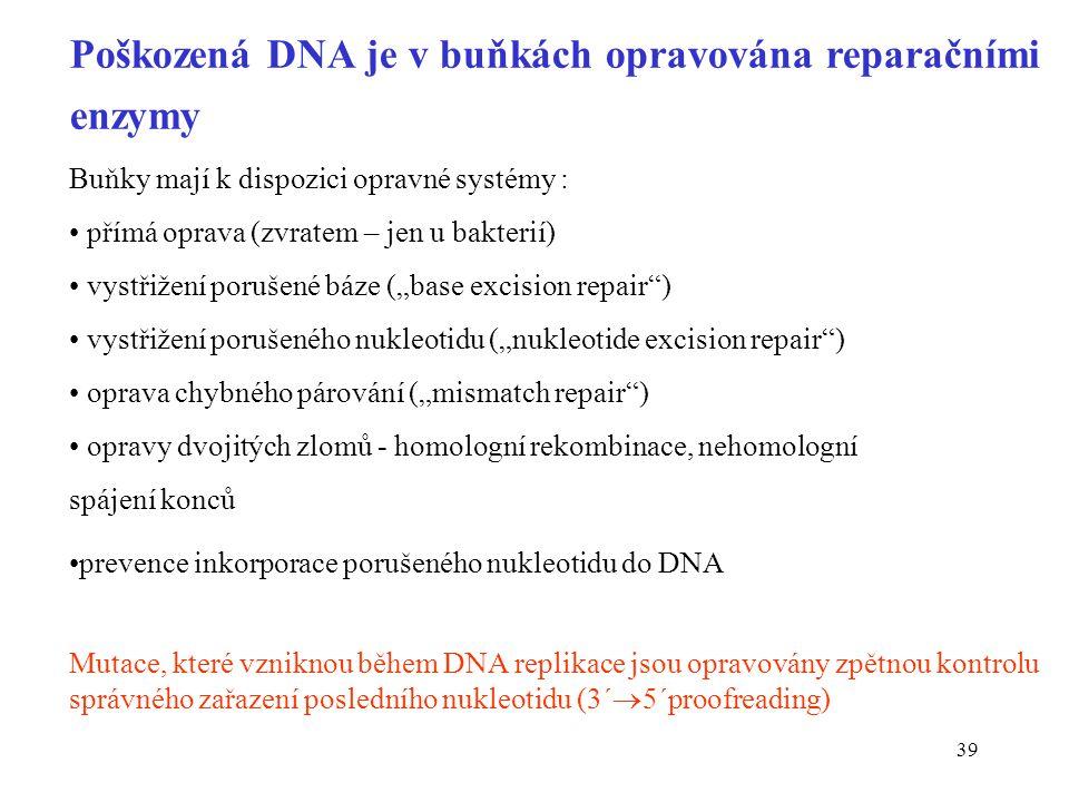 39 Poškozená DNA je v buňkách opravována reparačními enzymy Buňky mají k dispozici opravné systémy : přímá oprava (zvratem – jen u bakterií) vystřižen