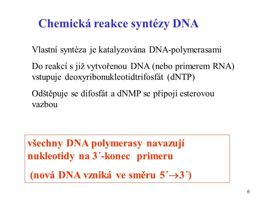 6 všechny DNA polymerasy navazují nukleotidy na 3´-konec primeru (nová DNA vzniká ve směru 5´  3´) Chemická reakce syntézy DNA Vlastní syntéza je kat