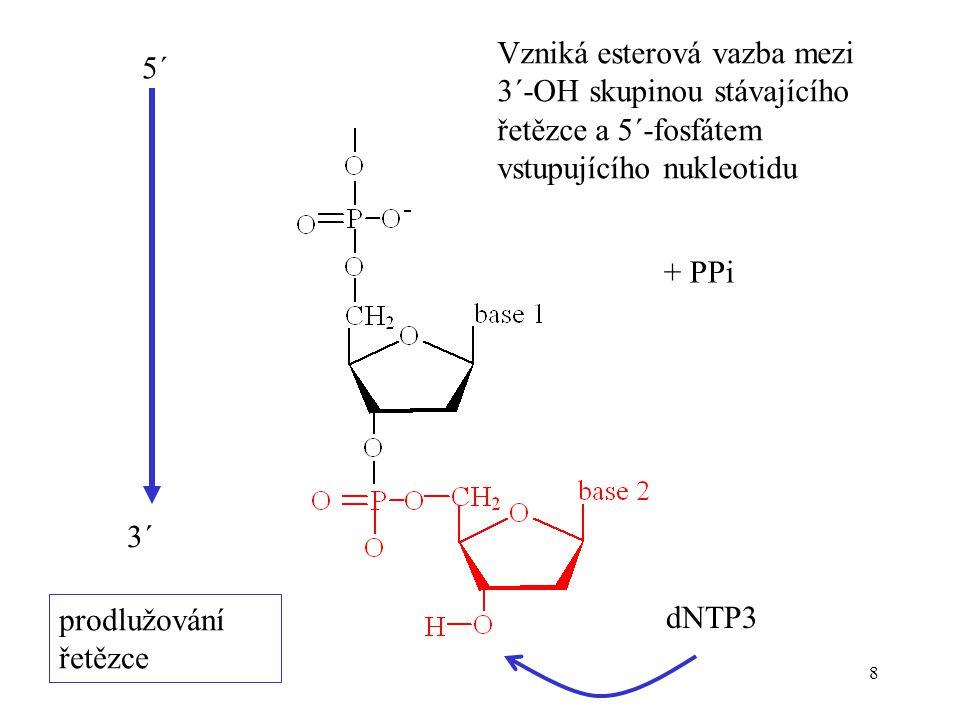 8 prodlužování řetězce dNTP3 + PPi Vzniká esterová vazba mezi 3´-OH skupinou stávajícího řetězce a 5´-fosfátem vstupujícího nukleotidu 5´ 3´