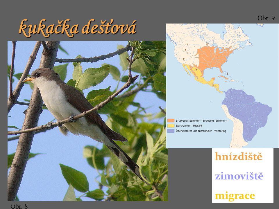 Obr. 8 Obr. 9 hnízdiště zimoviště migrace