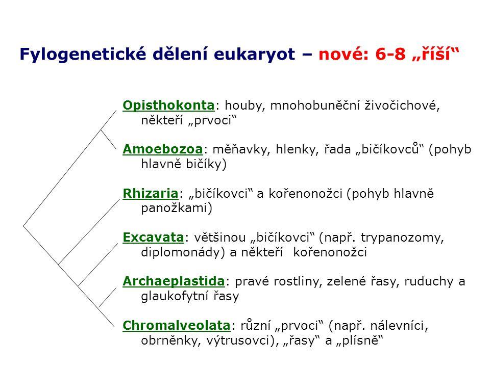 """Fylogenetické dělení eukaryot – nové: 6-8 """"říší Opisthokonta: houby, mnohobuněční živočichové, někteří """"prvoci Amoebozoa: měňavky, hlenky, řada """"bičíkovců (pohyb hlavně bičíky) Rhizaria: """"bičíkovci a kořenonožci (pohyb hlavně panožkami) Excavata: většinou """"bičíkovci (např."""