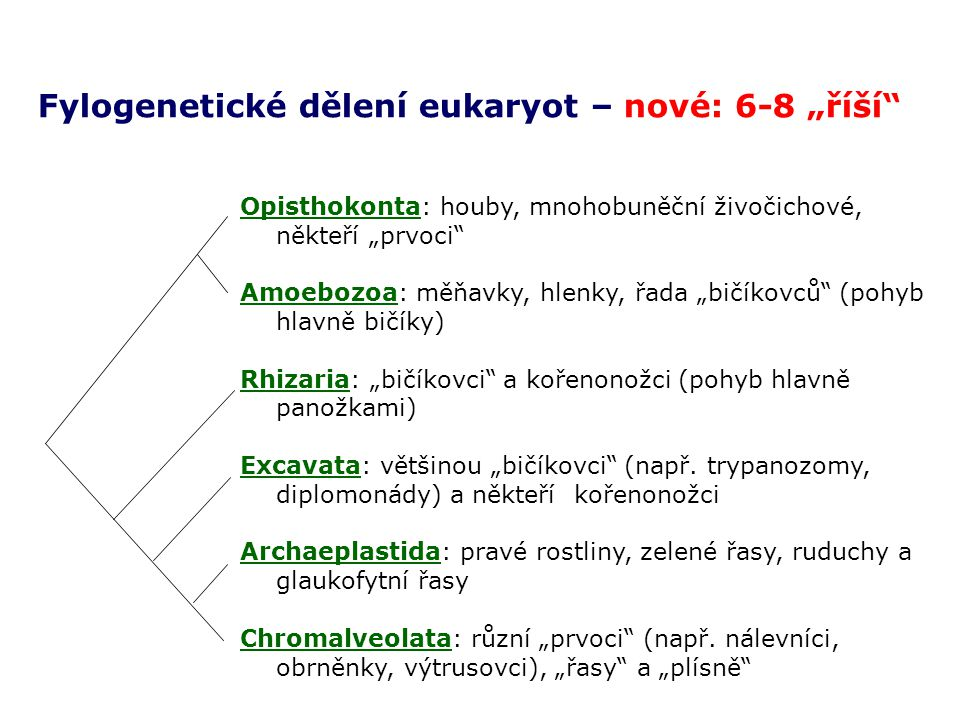 Animalia = Metazoa Hexactinellida Bilateria .CnidariaPlacozoaCtenophoraDemospongia .