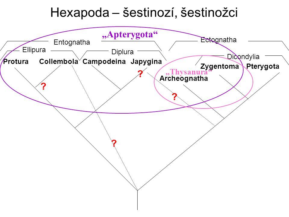 Hexapoda – šestinozí, šestinožci ProturaCollembola Ellipura CampodeinaJapygina Diplura PterygotaZygentoma Dicondylia Archeognatha Entognatha Ectognath