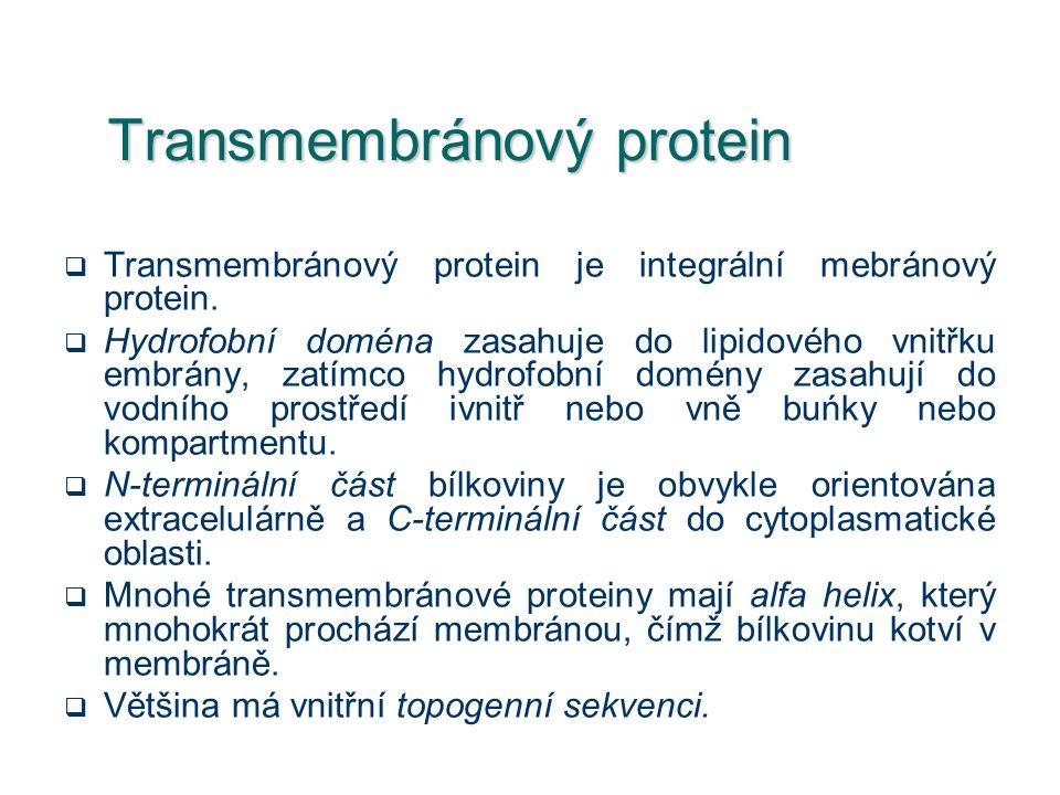 Transmembránový protein  Transmembránový protein je integrální mebránový protein.  Hydrofobní doména zasahuje do lipidového vnitřku embrány, zatímco
