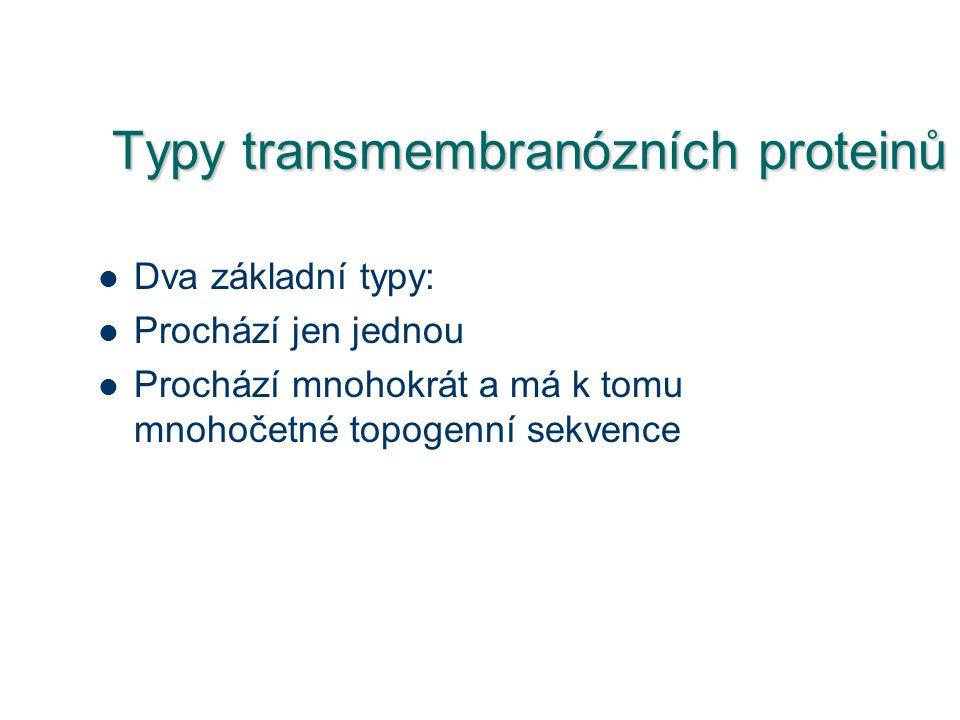 Typy transmembranózních proteinů Dva základní typy: Prochází jen jednou Prochází mnohokrát a má k tomu mnohočetné topogenní sekvence