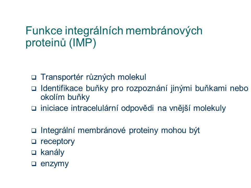 Funkce integrálních membránových proteinů (IMP)  Transportér různých molekul  Identifikace buňky pro rozpoznání jinými buňkami nebo okolím buňky  i