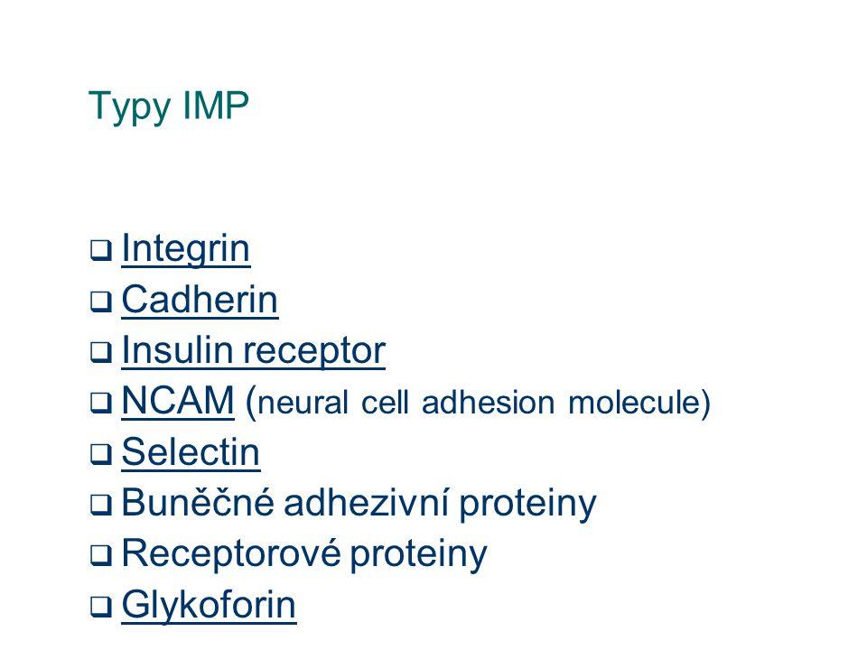 Typy IMP  Integrin Integrin  Cadherin Cadherin  Insulin receptor Insulin receptor  NCAM ( neural cell adhesion molecule) NCAM  Selectin Selectin